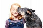 stock photo of cattle dog  - young girl with her australian cattle dog - JPG