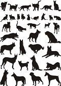 stock photo of cat dog  - Vector illustrations of domestic cats and dogs - JPG