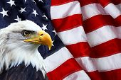 pic of eagles  - North American Bald Eagle on American flag - JPG