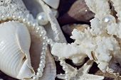 stock photo of beach shell art  - a lot of sea shells and perls in art mess close up - JPG