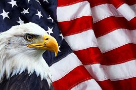 picture of eagles  - North American Bald Eagle on American flag - JPG