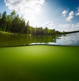 foto of bottomless  - Split shot of the freshwater pond with forest above the surface and glare blank background underwater - JPG