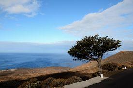 image of juniper-tree  - Gnarled Juniper Tree Shaped By The Wind at El Sabinar - JPG