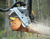 The harvester working in a forest. Harvest of timber. Firewood as a renewable energy source. Agricul poster