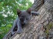 stock photo of bimbo  - Amazing Little Bimbo Cat On the Tree - JPG