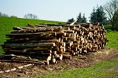 pic of chub  - A huge pile of chubbed wood with blue sky - JPG