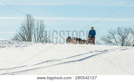 poster of A Team Of Four Husky Sled Dogs Running On A Snowy Wilderness Road. Sledding With Husky Dogs In Winte
