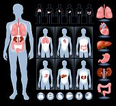 stock photo of intestines  - Set of human anatomy parts - JPG