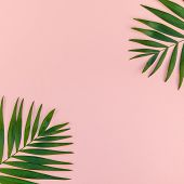 Creative Flat Lay Top View Of Green Tropical Palm Leaves Millennial Pink Paper Background With Pinea poster