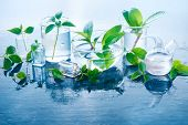 Green Plants In Glass Jars Header. Clarity And Freshness Concept With Leaves And Water. Light Backgr poster