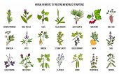 Best Herbs For Menopause Symptom Treatment. Hand Drawn Set Of Medicinal Herbs poster