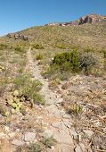 picture of stagecoach  - permian reef trail - JPG