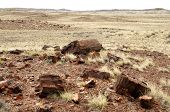 picture of paleozoic  - petrified wood and desert hills - JPG