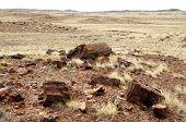stock photo of paleozoic  - petrified wood and desert hills - JPG