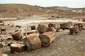 image of paleozoic  - petrified wood and desert hills - JPG