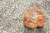 pic of paleozoic  - petrified wood on cracked desert playa - JPG