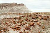 stock photo of paleozoic  - petrified wood and painted desert mesa - JPG