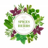Spices And Herbs Background. Fresh Herb Cooking Aromatic Plants. Indian Food Vector Frame. Culinary  poster
