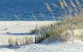 foto of sea oats  - A view of the Alabama gulf coast with sea oats in the foreground.