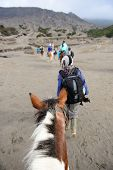 picture of bromo  - the tourist ride horse are going to Bromo mountain indonesia - JPG
