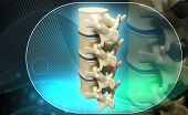 stock photo of lumbar spine  - Digital illustration of human spine in colour background - JPG