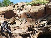 stock photo of exoskeleton  - Ancient dinosaur fossils in a rock cliff - JPG