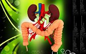 pic of intestines  - Digital illustration of  Intestine in colour  background - JPG