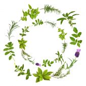 stock photo of valium  - Medicinal and culinary herbs in a circular design over white background - JPG