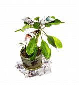 stock photo of cash cow  - Decorative tree with cash notes on branches - JPG