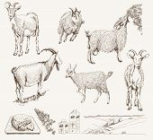 picture of goat horns  - vector sketch of a goat made by hand - JPG