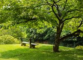image of dogwood  - Lonely single park bench or seat in the shade of a flowering dogwood tree in the shadows of the branches