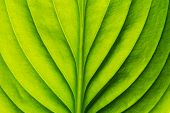 stock photo of photosynthesis  -  green leaf  - JPG