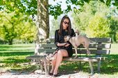 stock photo of greyhounds  - Young attractive girl sitting on bench with two greyhounds in the park - JPG