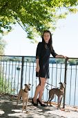 picture of greyhounds  - Young attractive girl  standing with two greyhounds - JPG