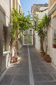 image of tourist-spot  - Flowers and Plants in the narrow streets of Rethymno - JPG