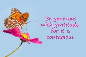 stock photo of generous  - Butterfly on a pink flower with a quote  - JPG