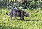 image of stroll  - cat strolls around in the garden under the sun  - JPG