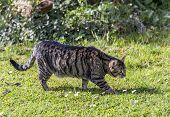 stock photo of stroll  - cat strolls around in the garden under the sun - JPG