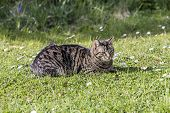 foto of cute tiger  - cute tiger cat relaxes at the green grass in the sun - JPG