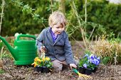 foto of  plants  - Blond boy of 2 years having fun with gardening and planting vegetable plants and flowers in garden outdoors - JPG