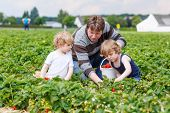 foto of strawberry blonde  - Two little funny kid boys and their father on organic strawberry farm in summer picking and eating fresh ripe berries - JPG