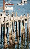 picture of dock  - Wooden poles making a dock in Maine - JPG