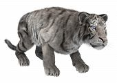 picture of white-tiger  - 3D digital render of a hunting white tiger isolated on white background - JPG