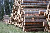 picture of bohemia  - felled trees ready for transportation South Bohemia Czech Republic - JPG