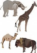 Collection Of Animals poster