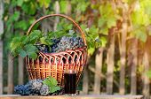 Glass Of Grape Juice With Grapes Wicker Basket, A Garden In The Background poster