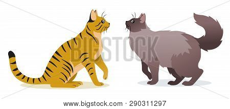 poster of Two Cats Vector - Smooth Coated Ginger Cat With Long Tail And Long-haired Cat With Long Fluffy Tail,