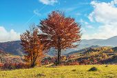 Autumn Countryside In Mountains. Trees In Red Foliage On The Edge Of A Meadows. Rural Fields On The  poster