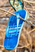 Old Lost And Discarded Flip-flop Sandals Hanging In Branches Of Seaside Trees. poster