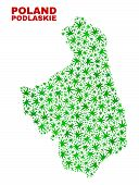 Vector Cannabis Podlaskie Voivodeship Map Collage. Concept With Green Weed Leaves For Cannabis Legal poster